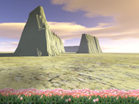 Flowers will grow in the desert